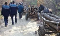 Amenzi usturătoare și lemne confiscate de polițiști